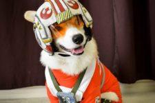 19 Star Wars X-Wing Pilot corgi cosplay