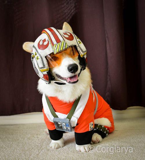 Star Wars X Wing Pilot corgi cosplay