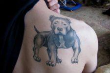 Pitbull tattoo on the shoulder
