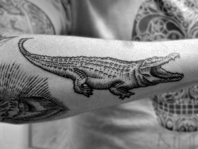 Alligator tattoo on the forearm