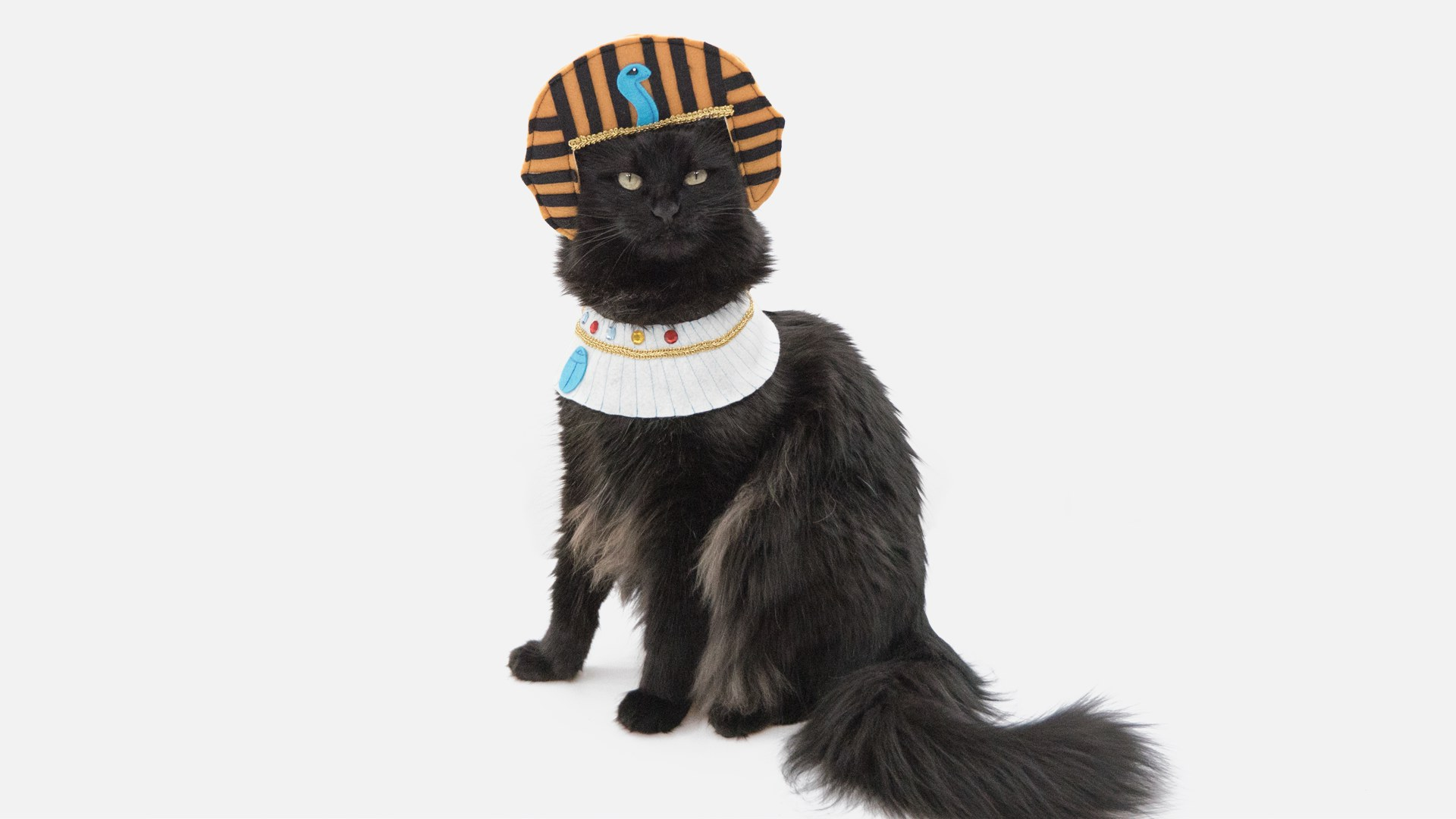 & Picture Of DIY Egyptian Pharaoh costume