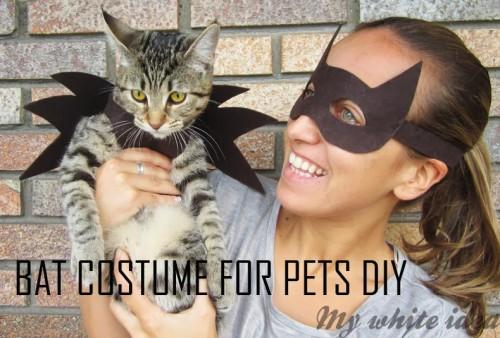 DIY bat costume for a cat (via www.shelterness.com)