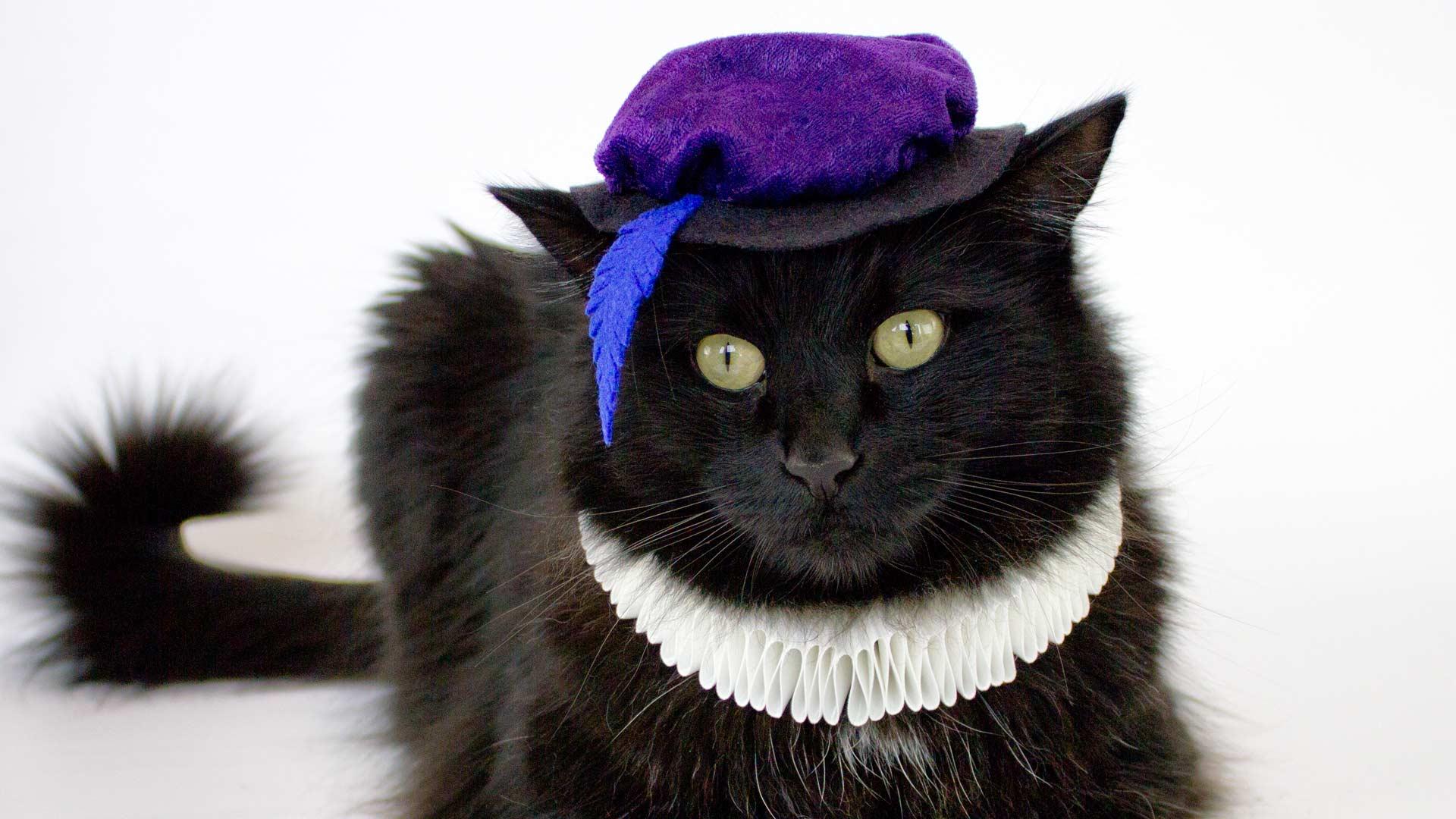 DIY elegant Renaissance costume for a cat