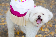 DIY pet Halloween cupcake costume