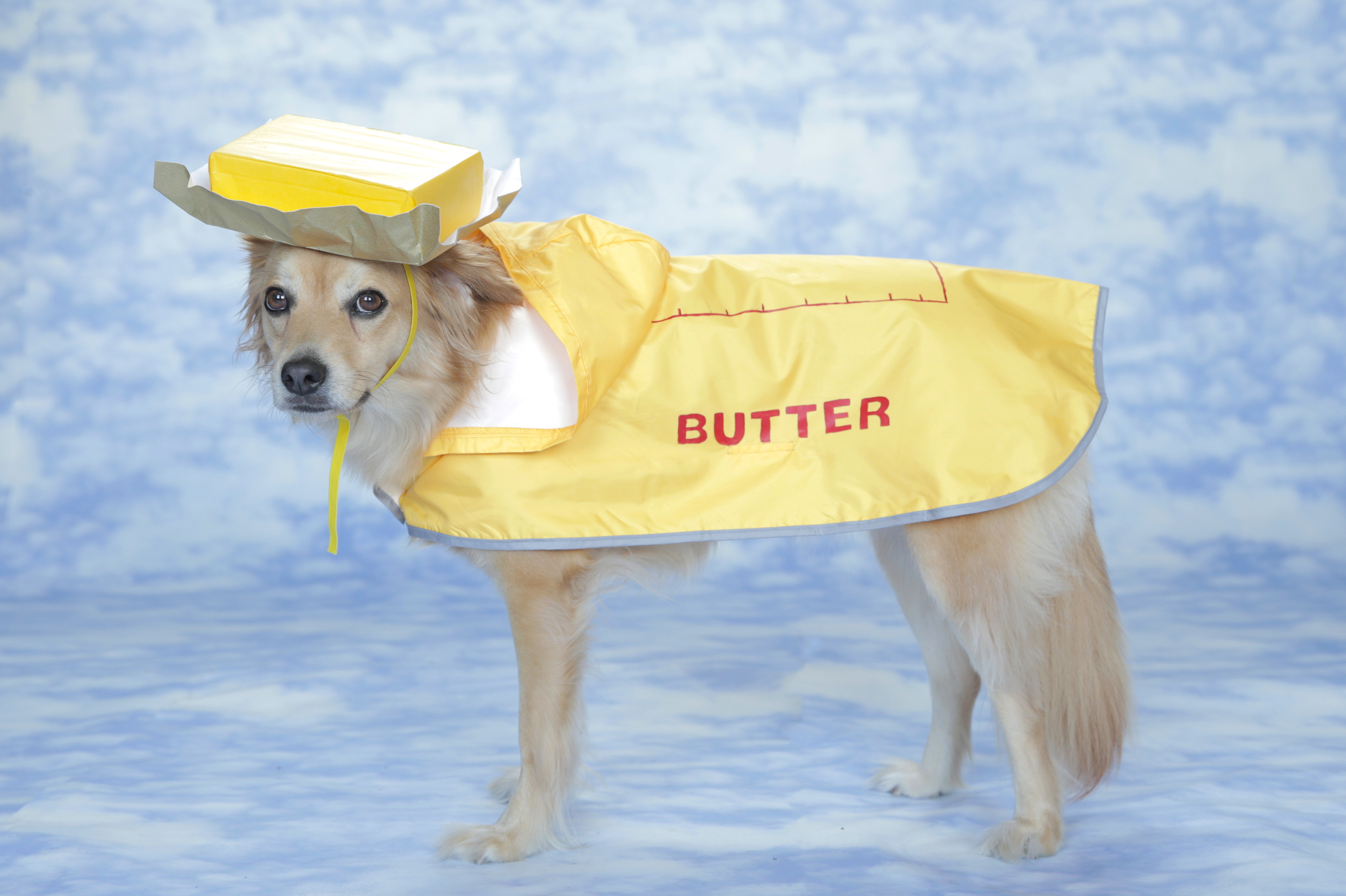 DIY easy butter costume for dogs