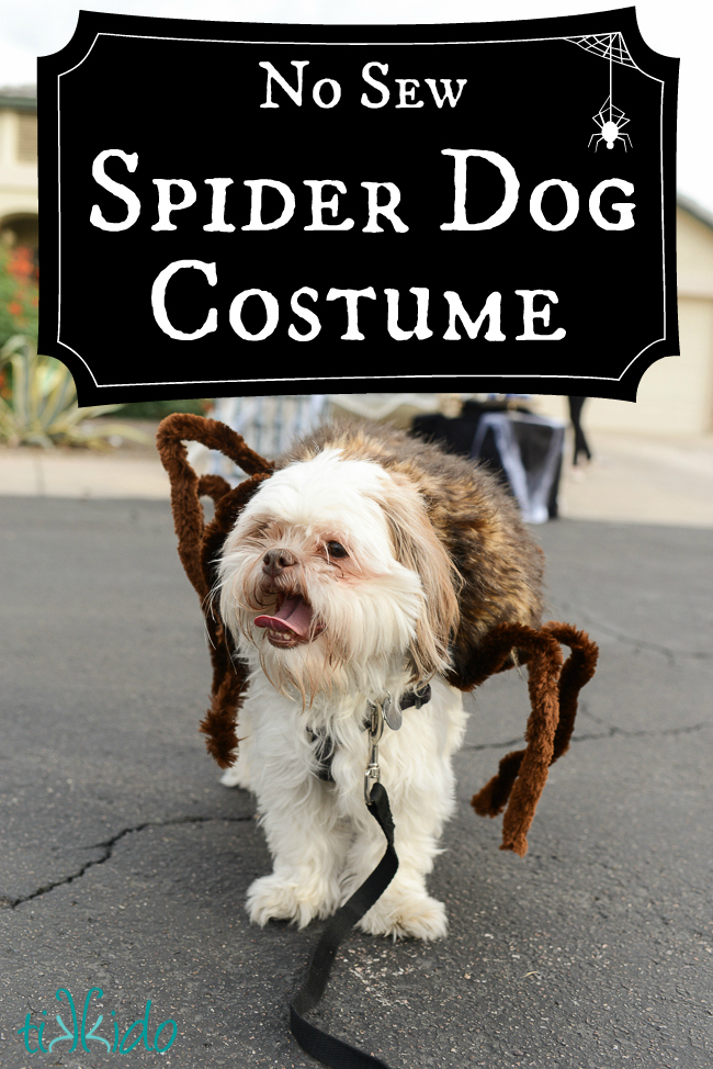 Picture Of DIY dog spider Halloween costume