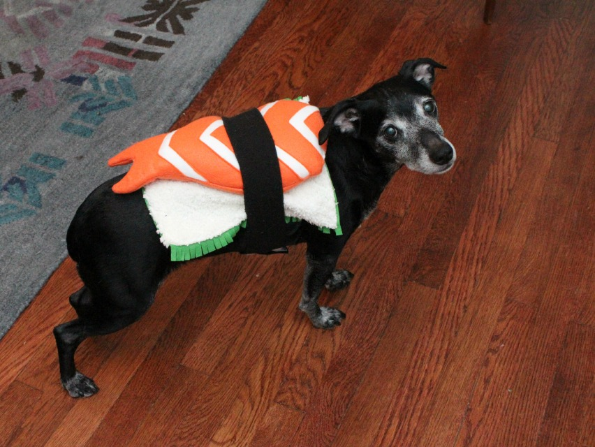 DIY sushi dog costume