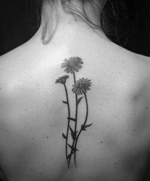 Three daisies tattoo on the back