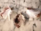 Original DIY Feather Necklace5