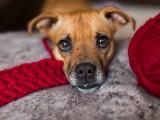 cozy-diy-chunky-crochet-infinity-scarf-to-make-3