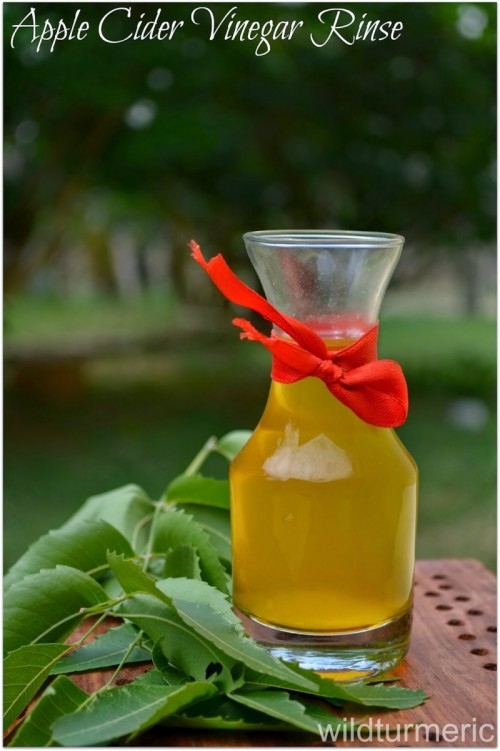 apple cider vinegar hair rinse (via wildturmeric)