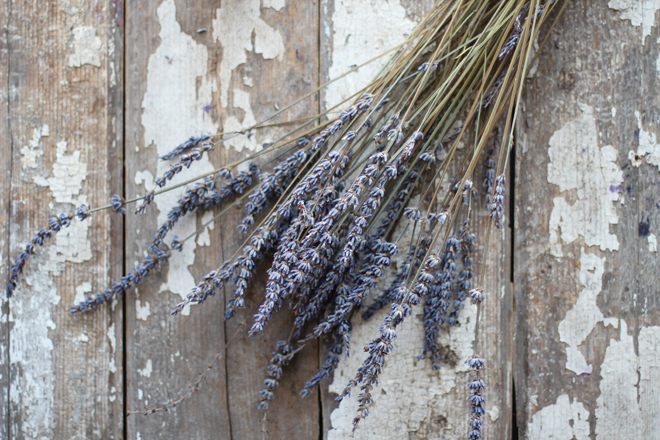 Picture Of diy lavender deodorant with an adorable smell  2